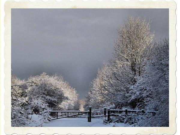 Winter Wonderland by alancharlton