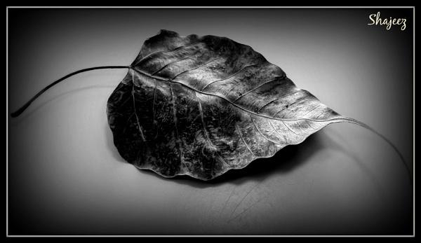 Forgotten.... by Shaji84