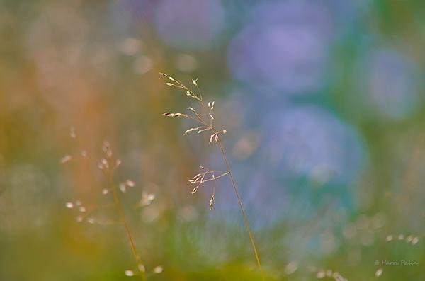 Dream meadow by HPalin