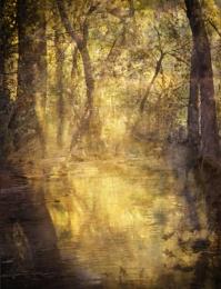 Autumn Light in Zion