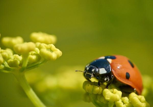 Ladybird by sadler2121