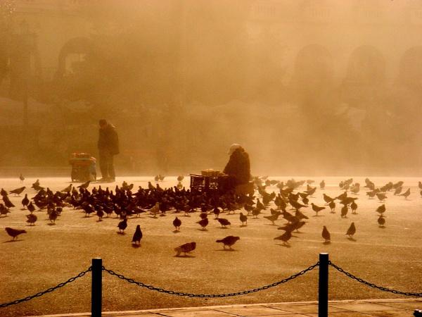 Among pigeons by leontari