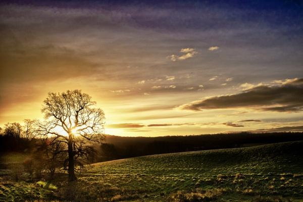 Tree by stevewlb