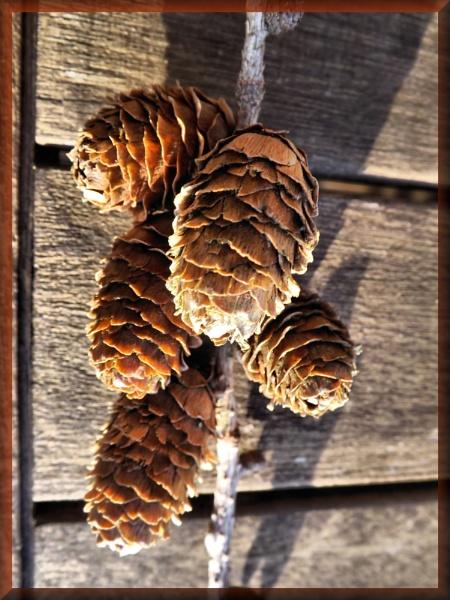 Cones by alancharlton