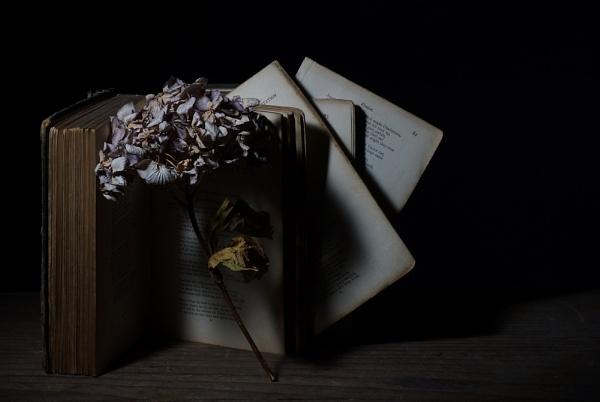Hydrangea by cattyal