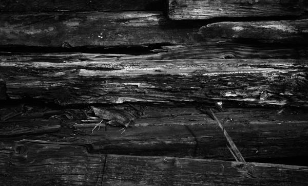 Old Wood by FrankThomas