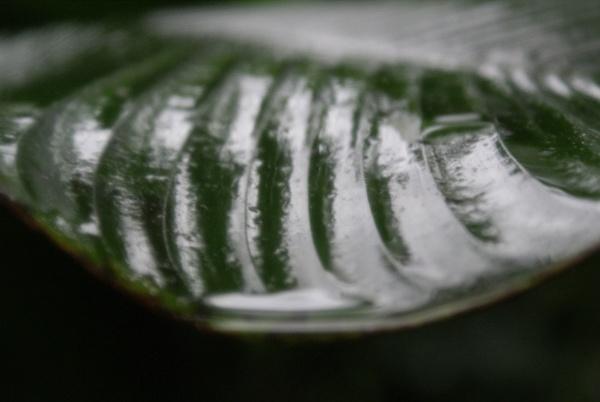 rain forest leaf by robobone