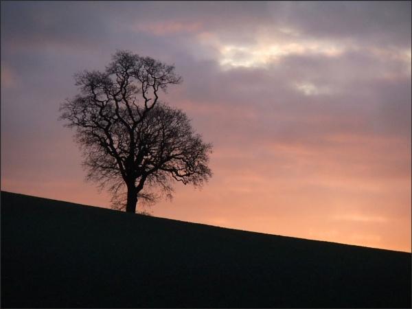 Tree at Sunrise by KentishChap