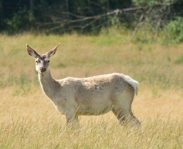 Hello Deer by eddie1