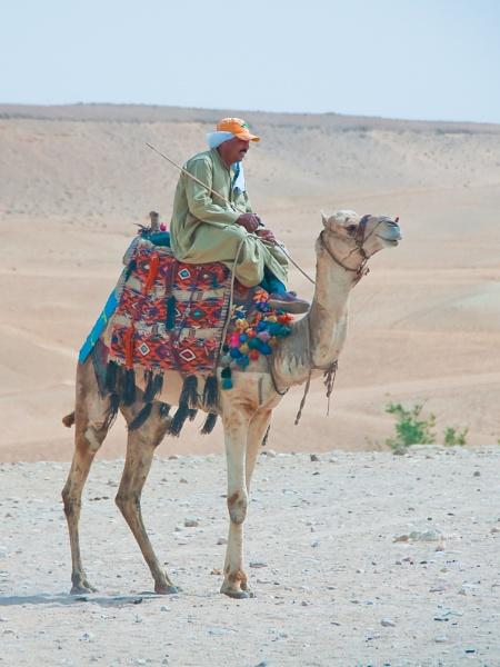 Camel at Cairo by pdunstan_Greymoon