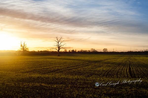 Morning Glory by Carl_Gough