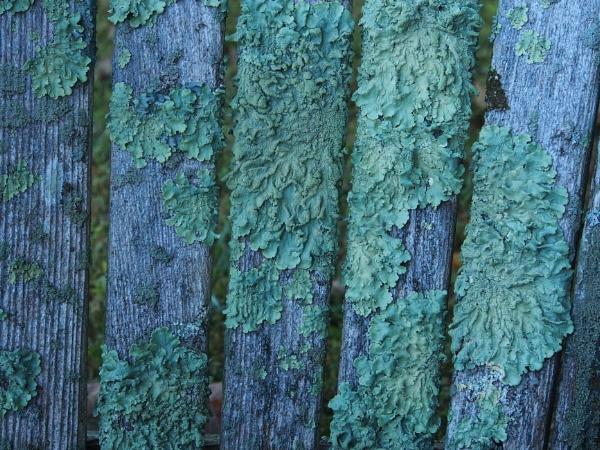 Lichens and Decomposition by handlerstudio