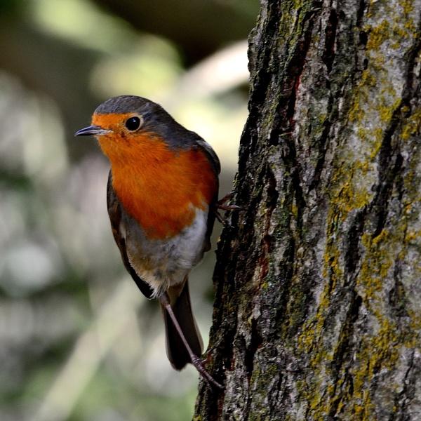 Christmas Bird by anglingandyq