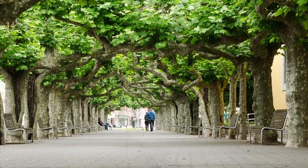 Tree Lined Walk by SteveOh
