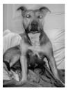 Dog by JeffHubbardPhotography