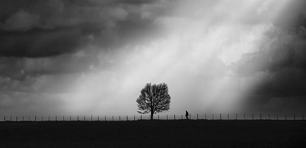 Tree of Life by Diggeo