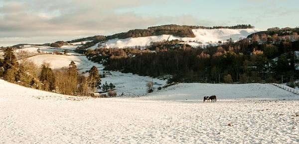 winter scene by luckybry