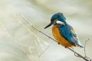 Kingfisher by MarkBullen