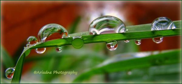 Rain Drops Sisters by SvetAriadne