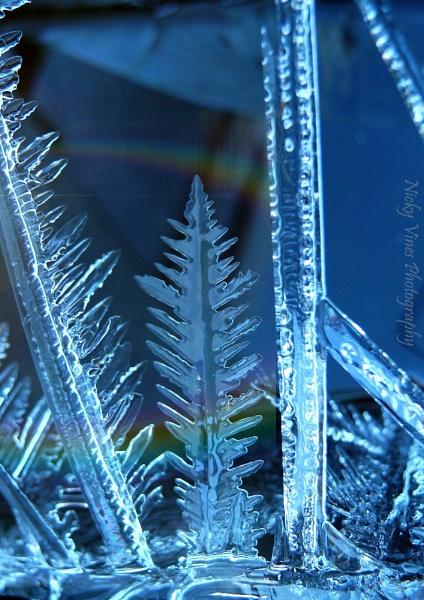 Chilly Morning by nickyv32