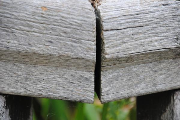 Urban wood... by Chinga