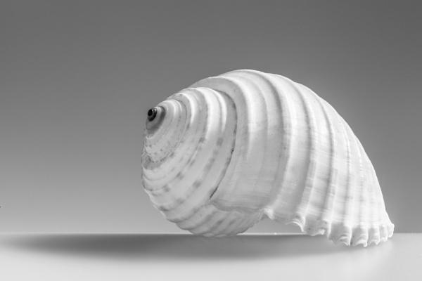 Sea Shell by DalesLass