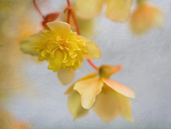 Twist of Lemon by WeeGeordieLass