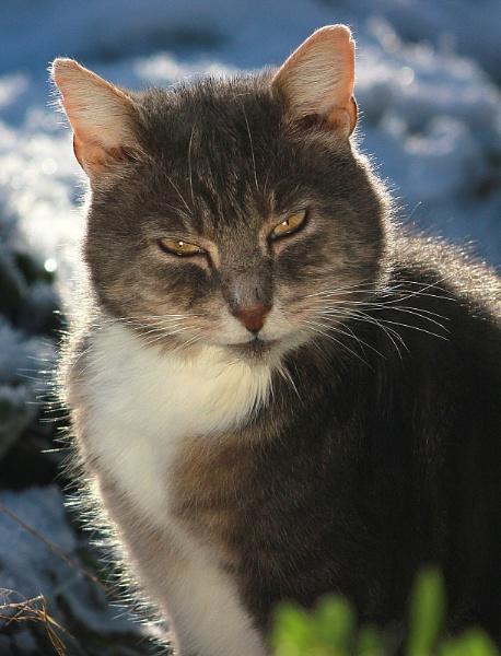 Cat portrait by turniptowers