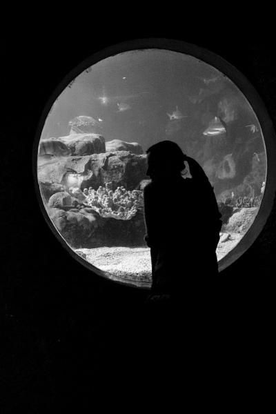 seaworld by psjekel