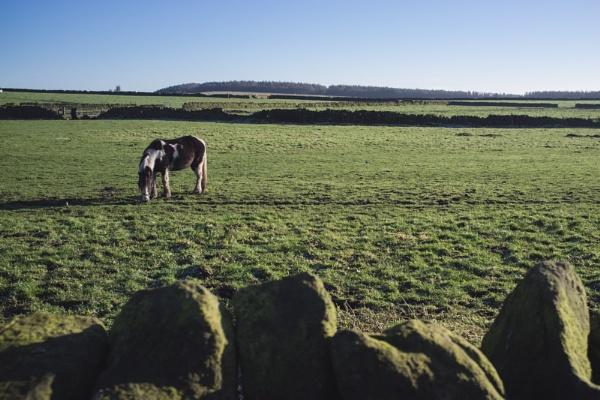 horse by psjekel