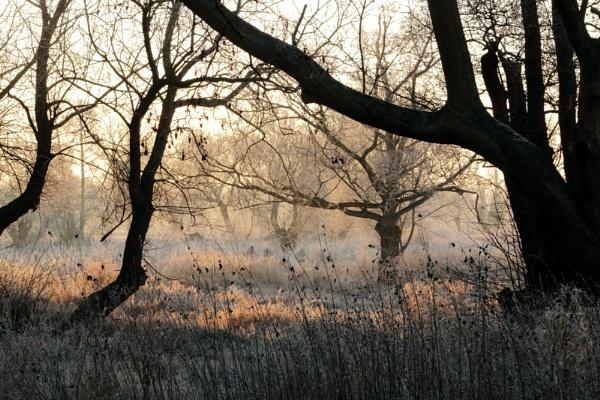 Frosty morning by Oldstoat