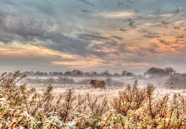 Cow in Frost by Gillken