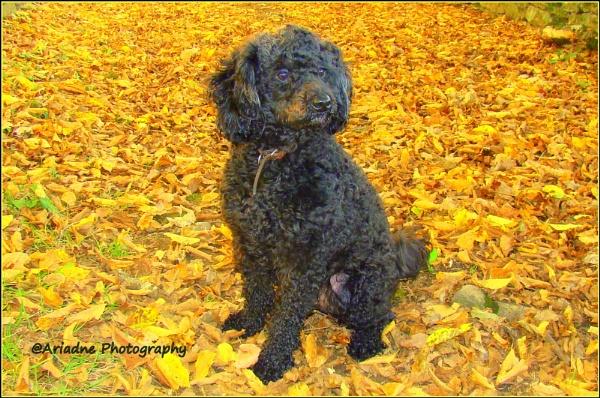 Romy\'s First Fall.... by SvetAriadne