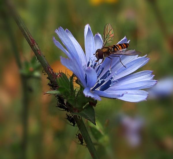 Bug Feast by CaroleS