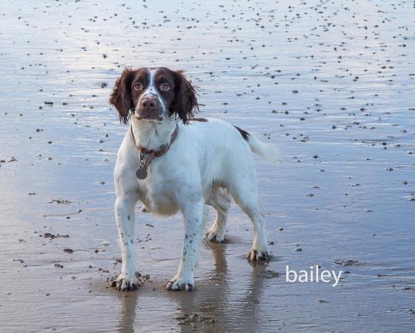 beautifull bailey by johnheaney