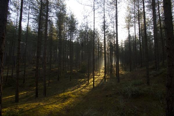 Newborough Forest 2 by DilysT