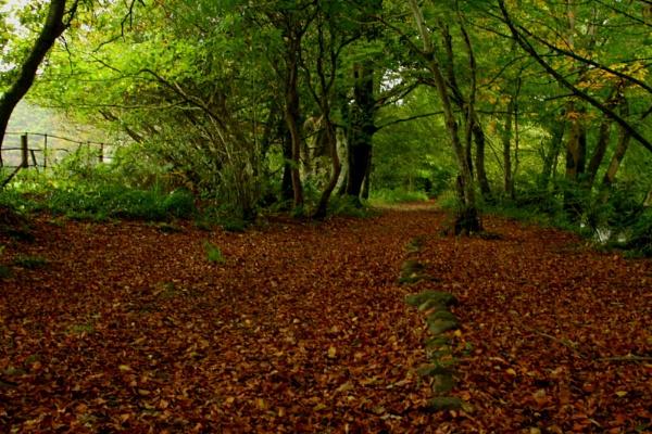 Autumnwalk by TobesOfHades