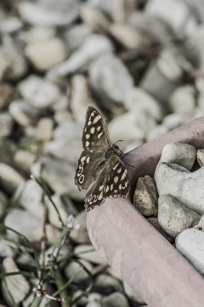 Butterfly 1 by Pj0