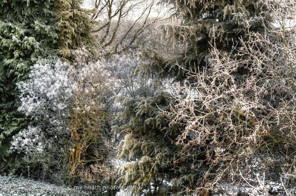 textures, pastels; tree frost by RayHeath