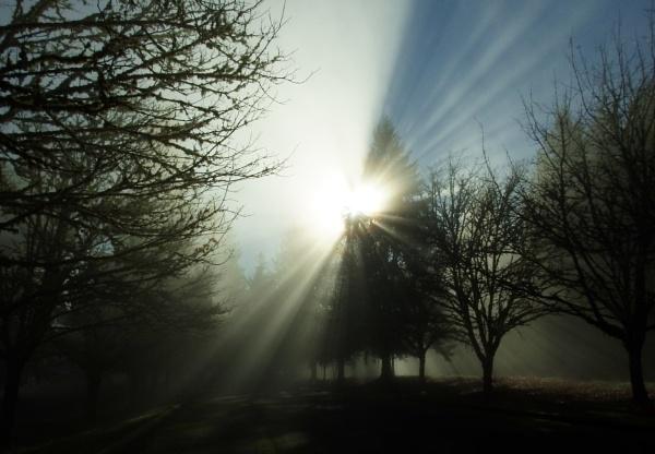 Fog by Houba