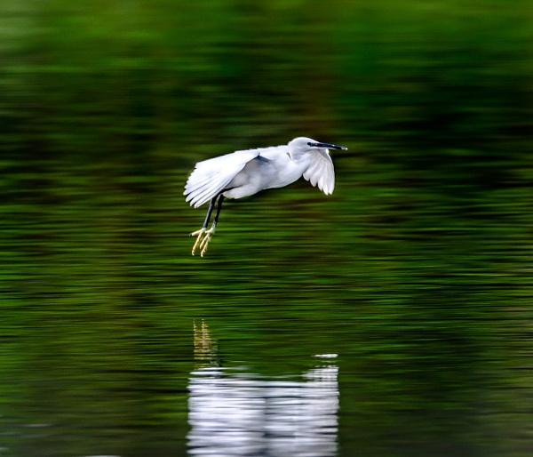 Glide by brianfrance1