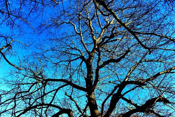 Pollocks Tree by freewilluk