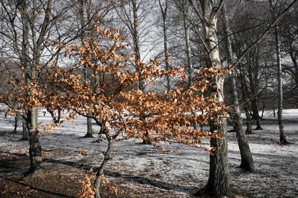 winter sunny day by psjekel