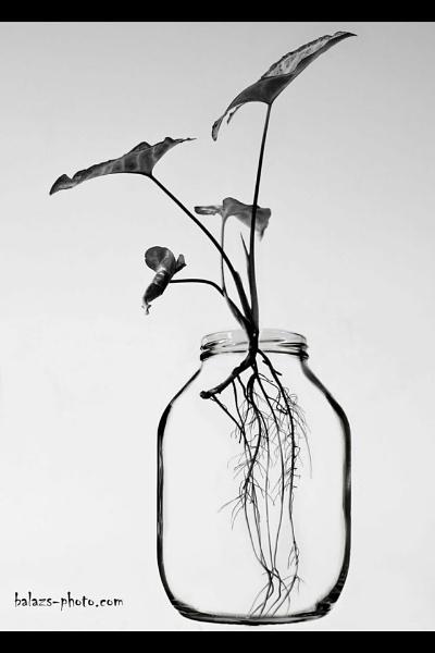 X-ray by boran