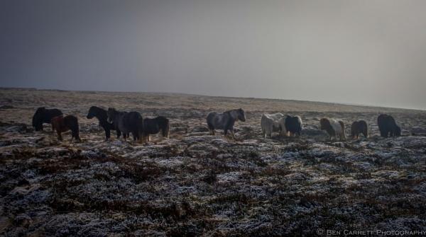 Wild Ponies by bencarrett