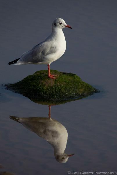 Standing One\'s Ground by bencarrett
