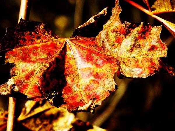 I like autumn by kazeva
