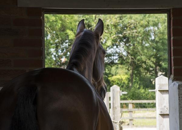 Horse Stable door summer trees by Pinkpony