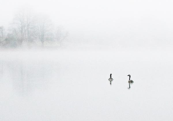 Misty Mentieth by DaveWhe