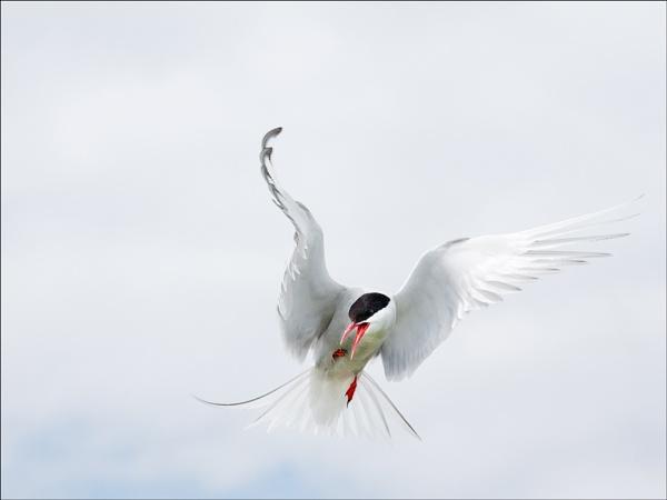 White Frenzy by DaveWhe